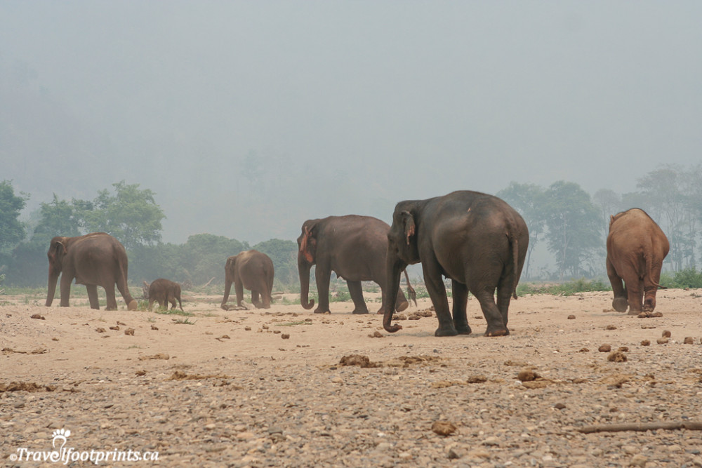 a line of elephants walking