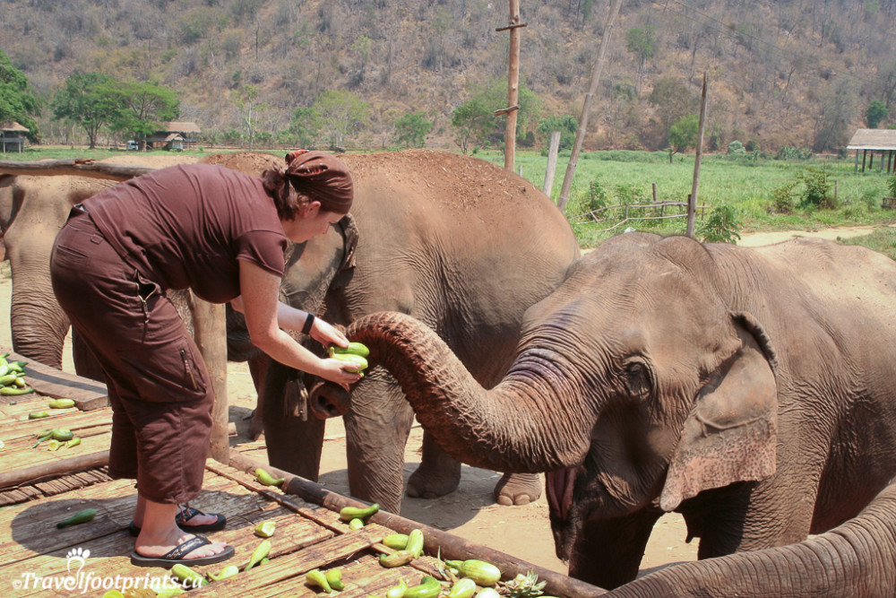 elephant nature park thailand (58)