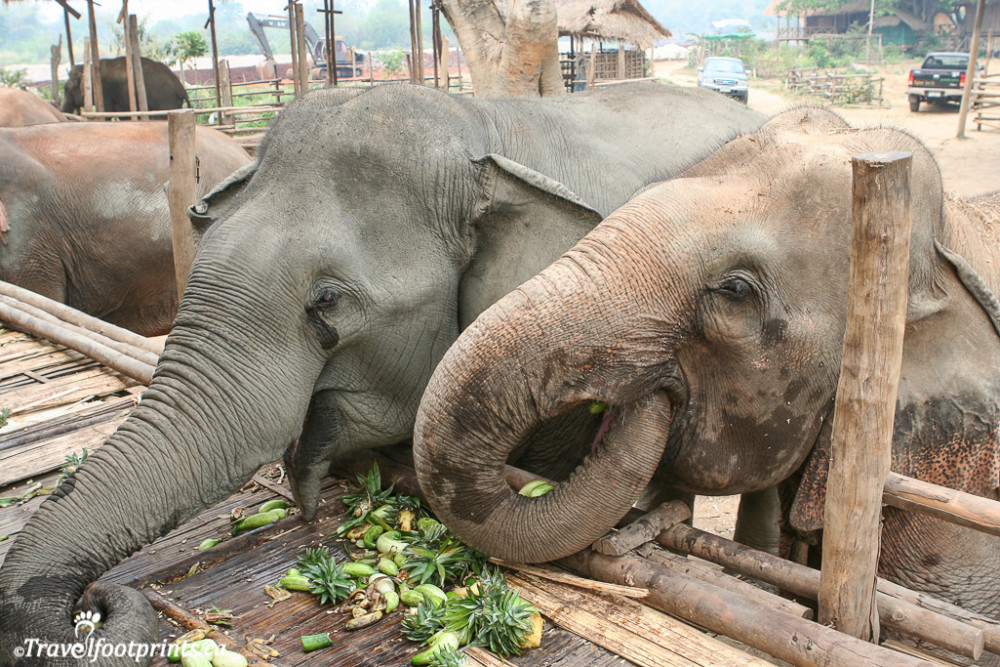 elephants reaching for food on the feeding platform