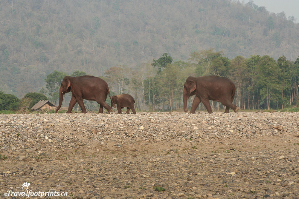 elephants roaming at the nature park