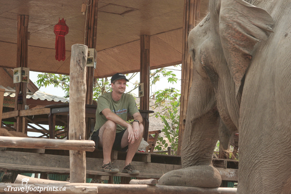 guest and max at the elephant nature park