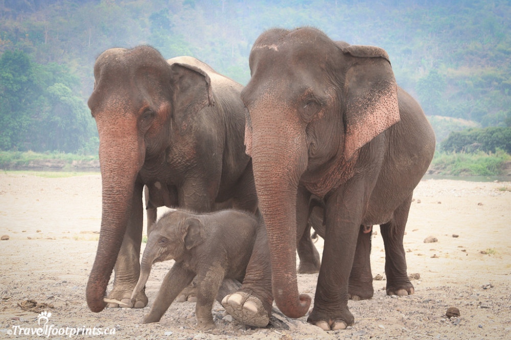 mother and aunt elephant with a baby