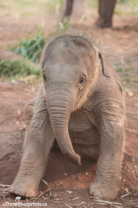 the cutest baby at the elephant nature park thailand
