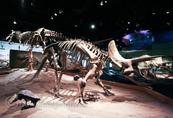 royall-tyrell-dinosaur-museum-brontosaurus-skeleton