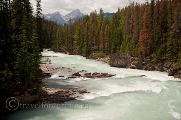 natural-bridge-kicking-horse-river-flowing-trees