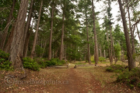 horny-island-forest-trail-helliwell-park