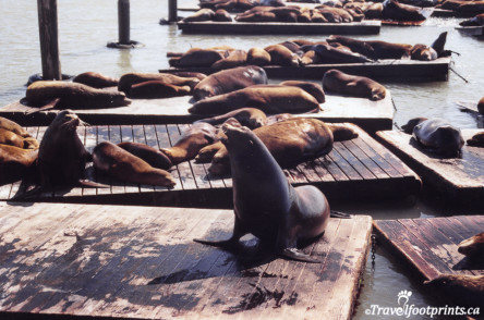 Sealions at Pier 39 Sanfrancisco