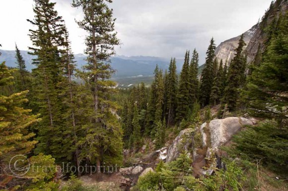lake-agnes-tea-house-trail-valley-view-trees