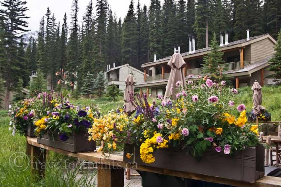 moraine-lake-lodge-chalets-flowers-planter-boxes