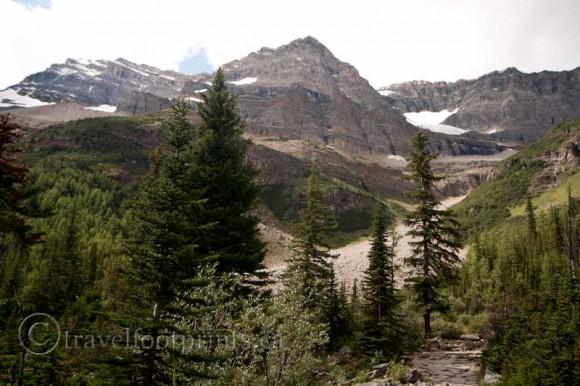 lake-louise-plain-six-glaciers-trail-mountain-tree-view