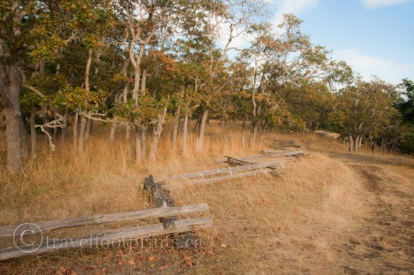 hornby-island-helliwell-park-trail-wood-snake-fence-trees