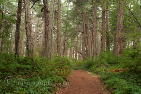 hornby-island-helliwell-park-trail-trees-forest