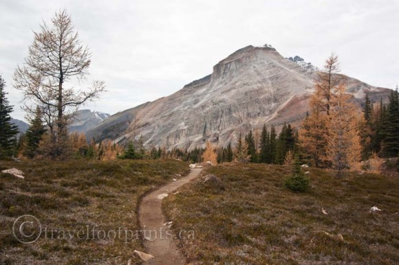 lake-ohara-trail-larch-trees-hiking-mountain