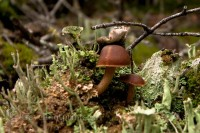 mushrooms-forest-lake-ohara