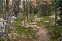 lake-ohara-hiking-trail-forest-trees