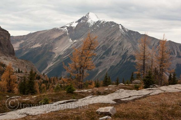 lake-ohara-mountain-larch-trees-trail-hiking-view