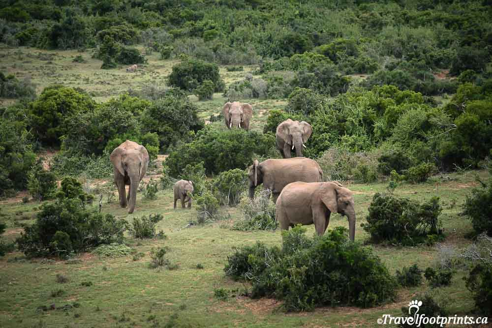 addo elephant park-8