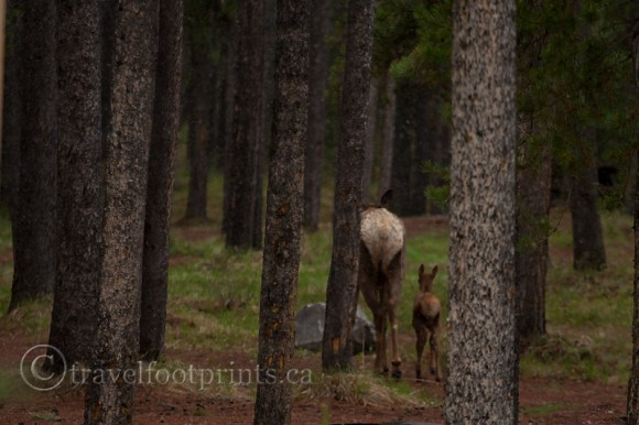 mother-baby-deer-forest