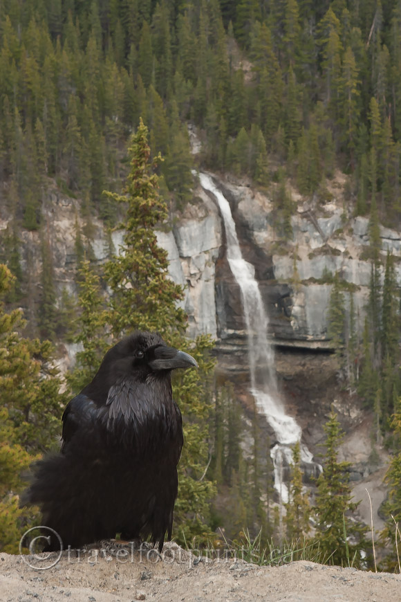 raven-waterfall