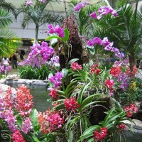 colorful orchid gardens singapore airport