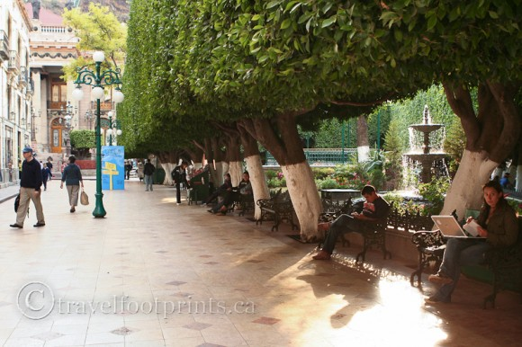 jardin-de-la-union-guanajuato-mexico-benches-laurel-trees-hedge-park