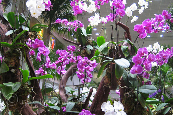 changi-airport-singapore-orchid-garden