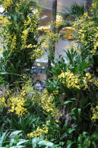 changi-airport-singapore-flowers