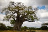 A Photographic Tour Of Tarangire National Park