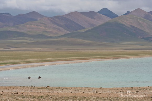 horses-wading-in-water-nam-tso-lake-tibet-mountains-blue-water