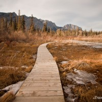 boardwalk on many springs trail bow valley provincial park kanaskis country
