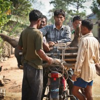 cambodian boys preparing pig to take to market siem reap