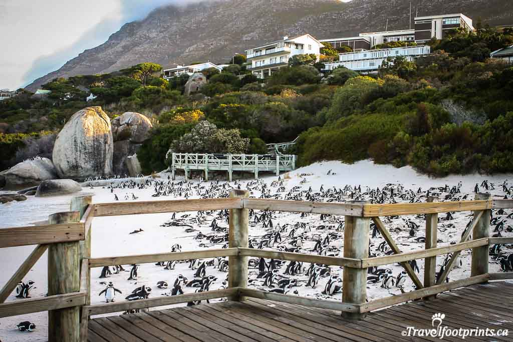 penguin viewing platform at boulders beach south africa