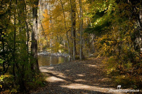 trees-trail-heffley-lake-fall-colours-leaves-kamloops-british-columbia