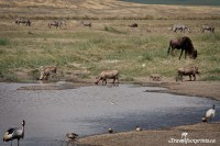 variety of wildlife around water on ngorongoro crater floor