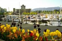 Springtime In Vancouver