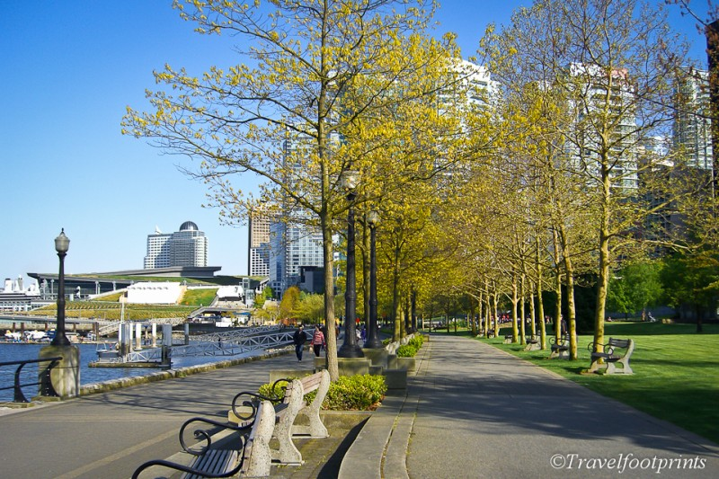 walkway-benches-trail-trees-leaves-spring-ocean-downtown-vancouver-coal-harbour-tourist-attraction