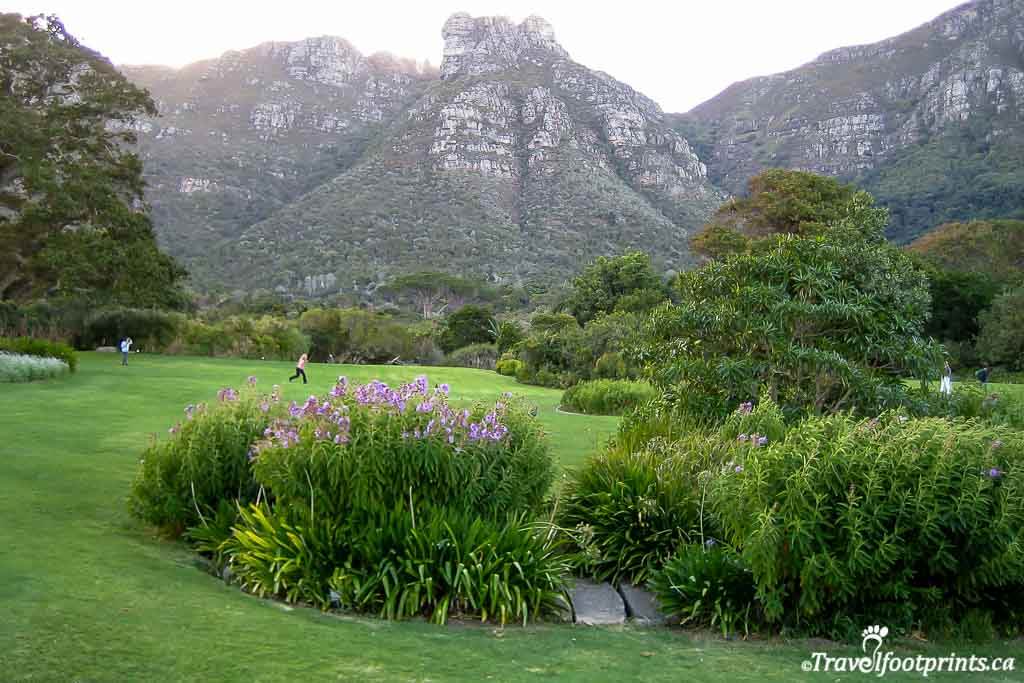 Grounds and flowers at Kirstenbosch Gardens cape town