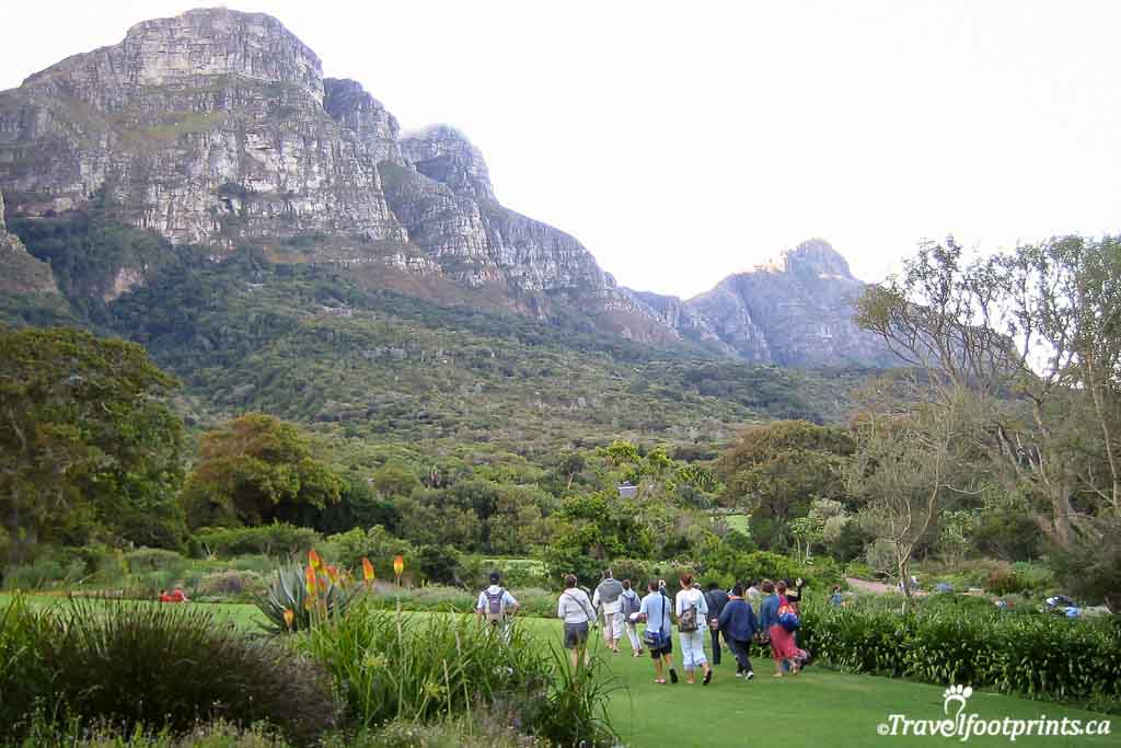 people walking around the grounds at Kirstenbosch gardens in cape town