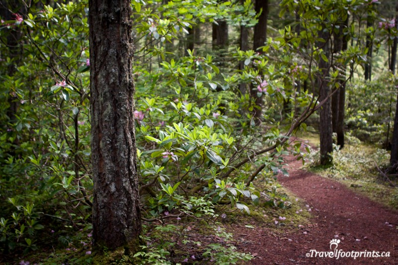 forest-trees-bark-trail-easy-walk-manning-provincial-park-british-columbia