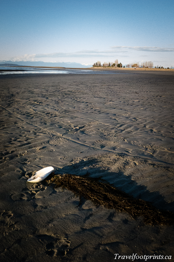 parksville-beach-low-tide-sand-clam-shell-sunshine-central-vancouver-island