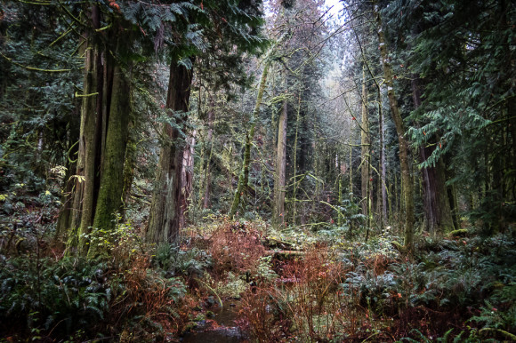 moss-trees-goldstream-provincial-park-victoria-vancouver-island-forest-walks-hiking-trails