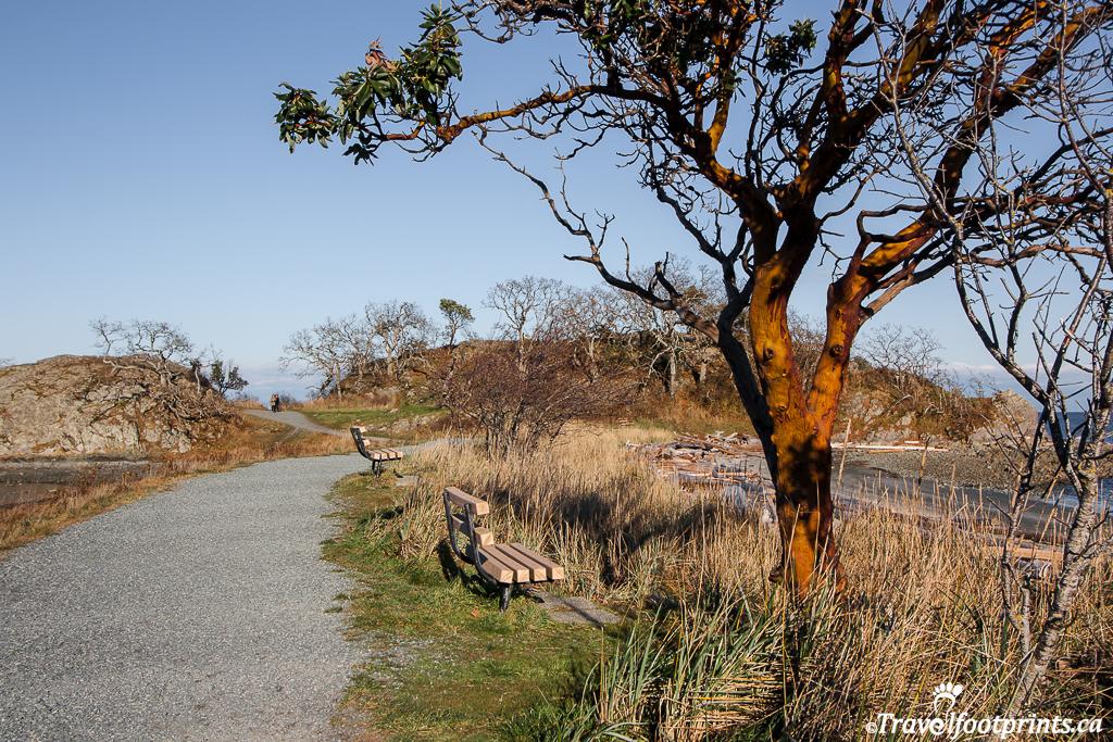 pipers-lagoon-easy-accessible-walkway-trail-handicap-benches-view-ocean-arbutus-tree-nanaimo-bc