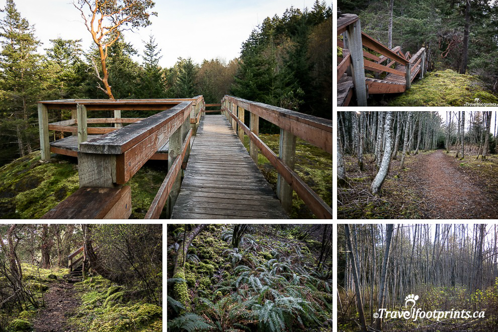 neck-point-park-nanaimo-arbutus-trees-forest-trail-ferns-moss-lichen