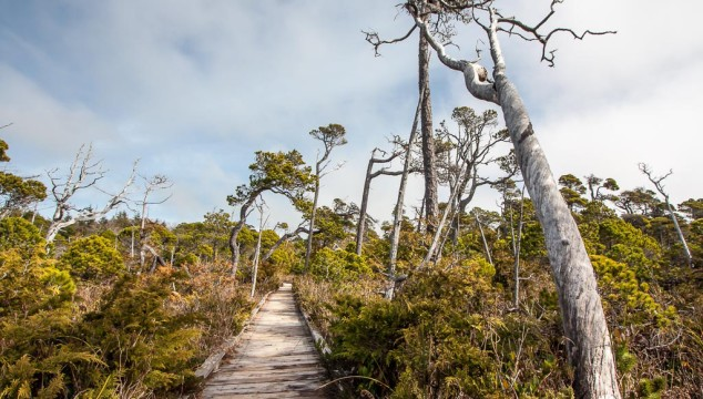 The Fascinating Tofino Bog Trail
