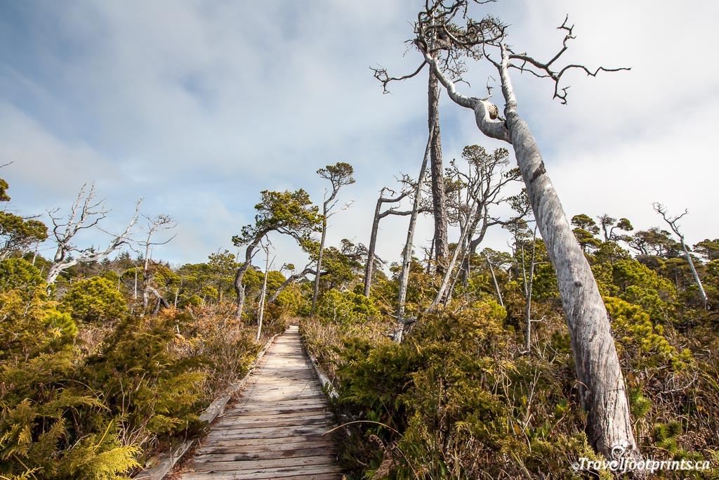 bog-trail-tofino-bc-board-walk-easy-hike-pacific-rim-national-park