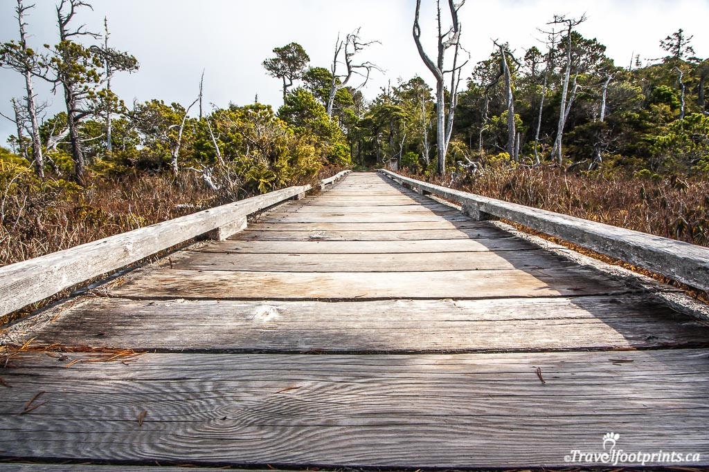 close up of boardwalk on bog trail in tofino bc